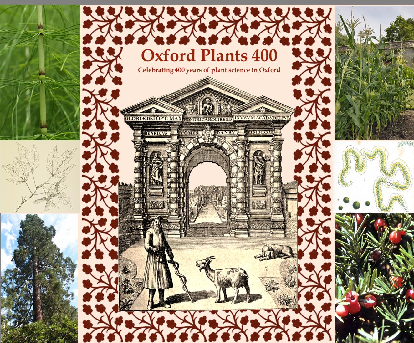 OxfordPlants400Final