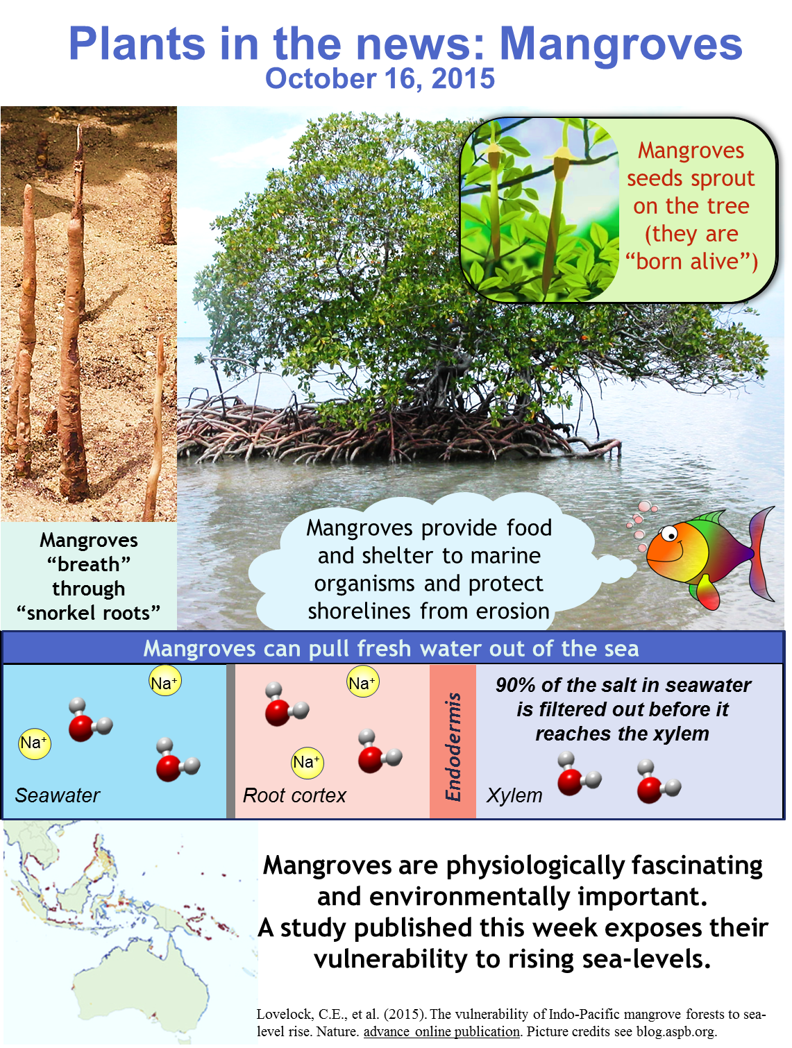 Plants in the News, October 16 2015: Marvellous Mangroves \u2013 Plant ...