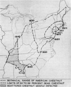 1949 map showing the rate of American chestnut's destruction  (Gravett, 1949).