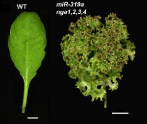 leafmargin
