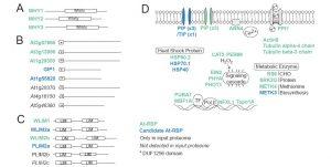 mrnabindingproteins