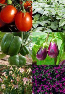 czerny_solanaceae-panel_12-21-16