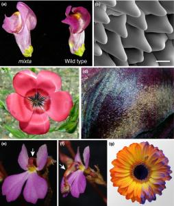 pollinatorphysics