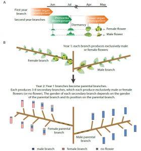 epigeneticse