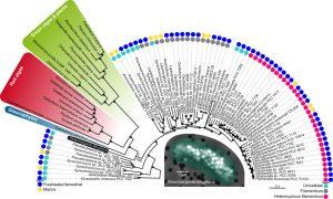 originsofplasmids