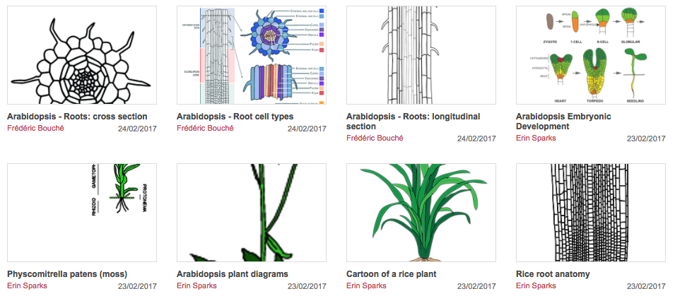 A Community Repository Of Plant Illustrations Plant Science Today