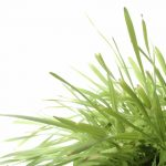 Natural grass against white background