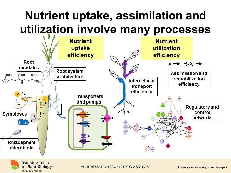 From Chemistry To Current Events The Six Macronutrients That Make Up A Plant N P K Mg S Ca Plant Science Today