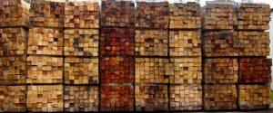 fascinationofplantsday photocontest-img_3392 timber mill mosaic by julia cavicchi