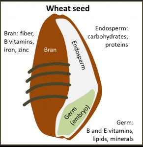 wheatseed.jpg