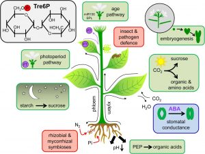 Best of 2016: Top Topics in Plant Physiology journal | Plant